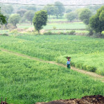 Fields-are-ready-to-produce
